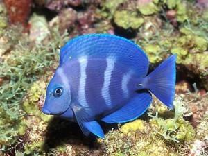 freshwaterfish-300x225