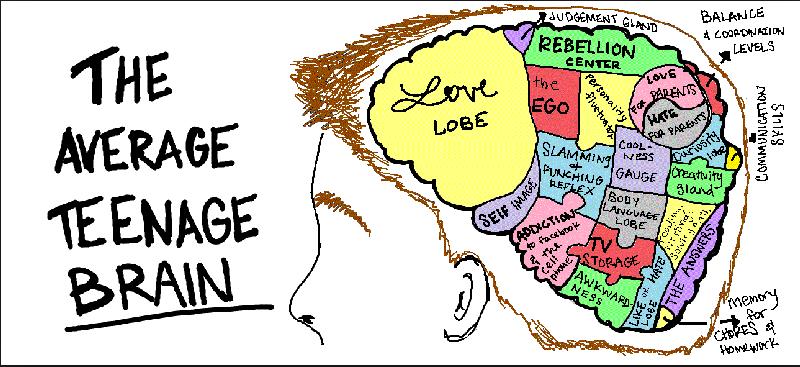 Average Teenage Brain copy
